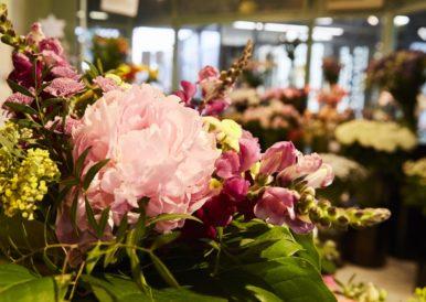 Lilium - Blumen